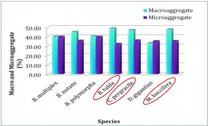 Aggregation properties of the soil collected from root zone of different exotic bamboos of FRI bambusetum