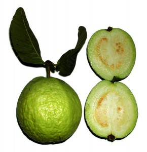 Psidium guajava_ Guava fruit