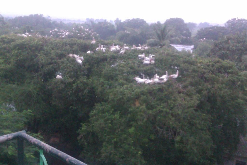 Telineelapuram_ Andhra Pradesh