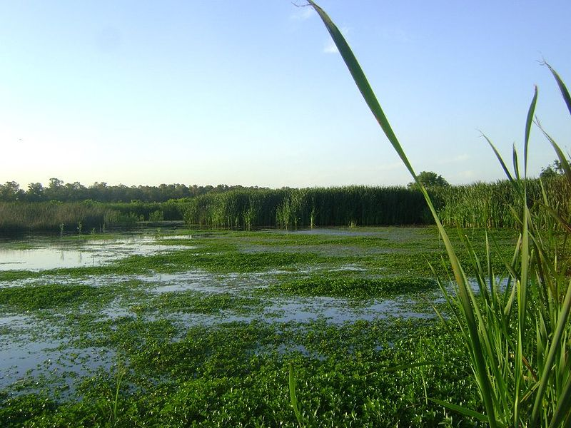 the preservation of nations wetlands