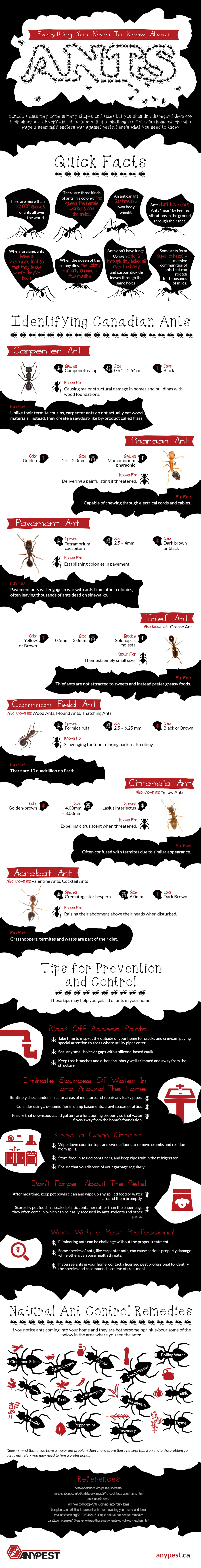 Everything You Need to Know About Ant Bites (and How to Avoid Them) Everything You Need to Know About Ant Bites (and How to Avoid Them) new pictures